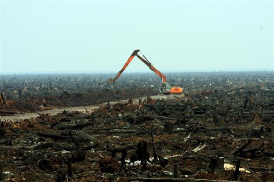 Destruction of Habitats