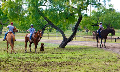 Dog training around horses