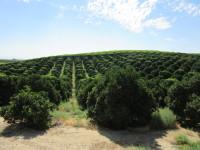 Organic Orchard