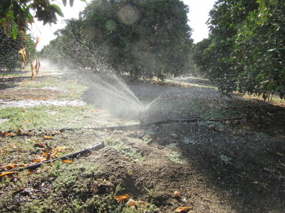 Produced Water for Agricultural Use