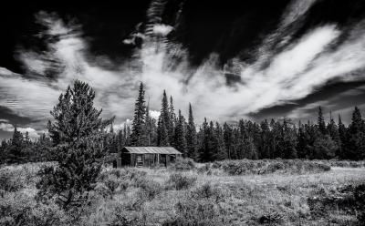 Shirley's Forgotten Cabin