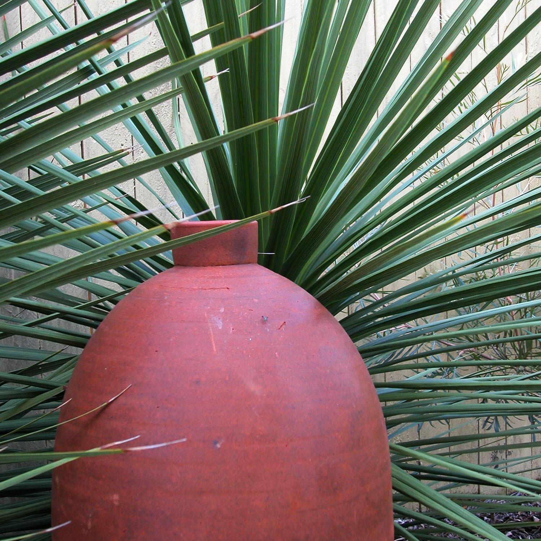 Lange Design - Urn Against Cordyline