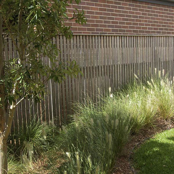 Hardwood batten fence in an Australian native garden