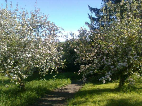 orchard1