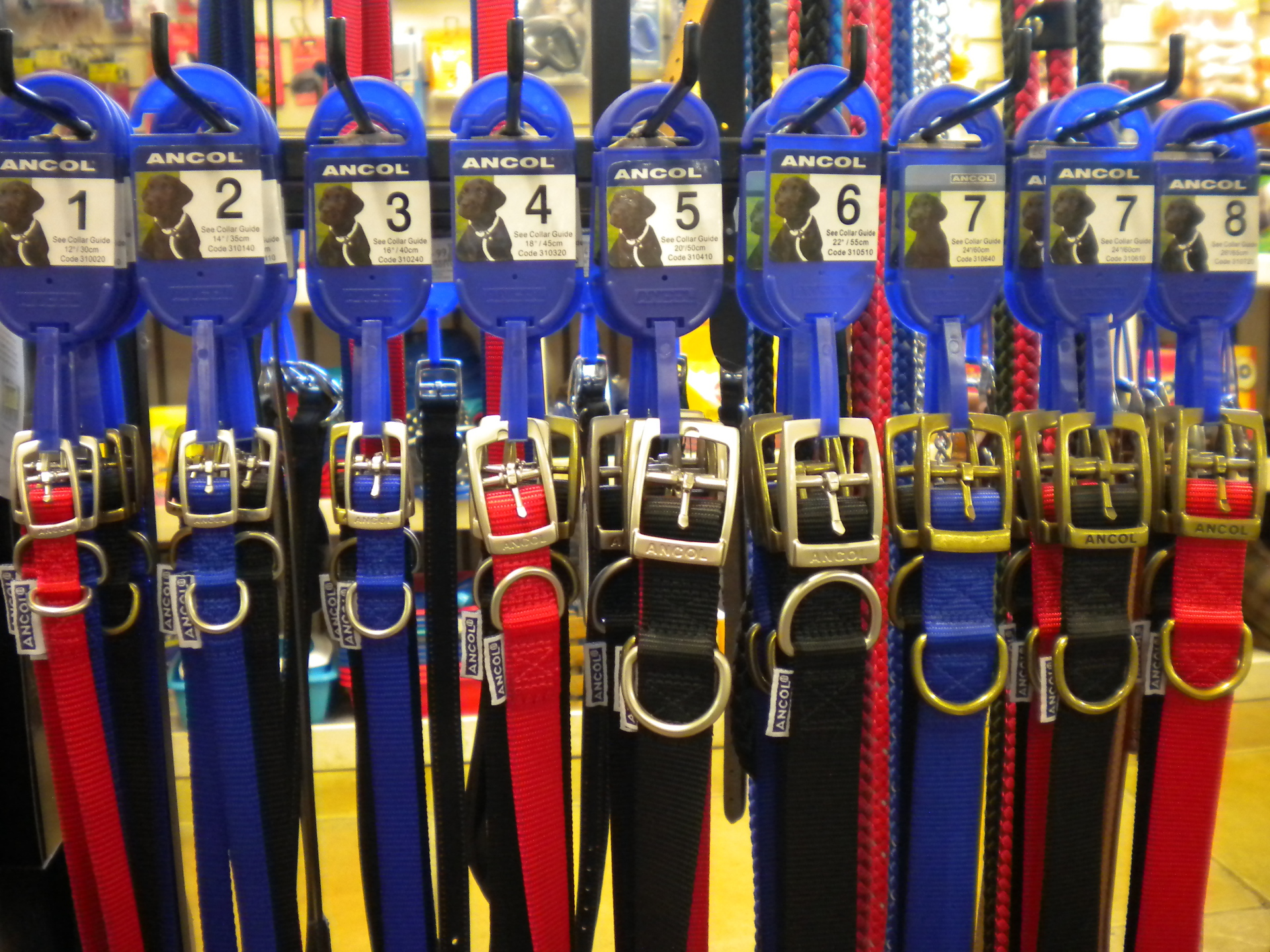 Collars and leads