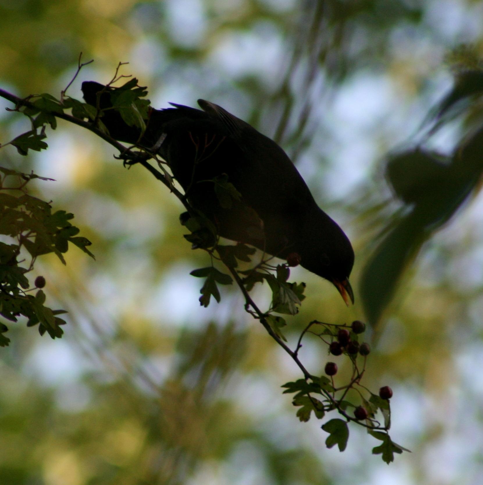 Birdcare at Eggesford Gardens