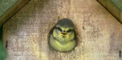 Help our feathered friends with a new nestbox