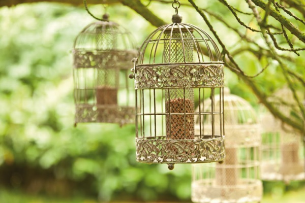 Chaplewood feeders