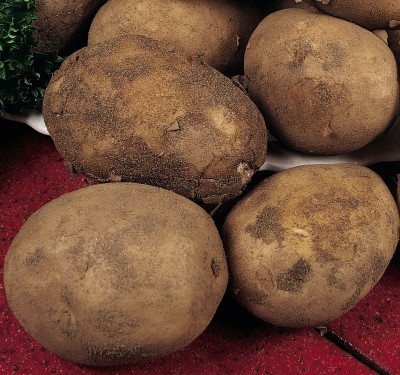 Guide to growing your own potatoes