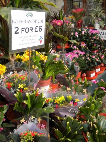 2 for £6 houseplants