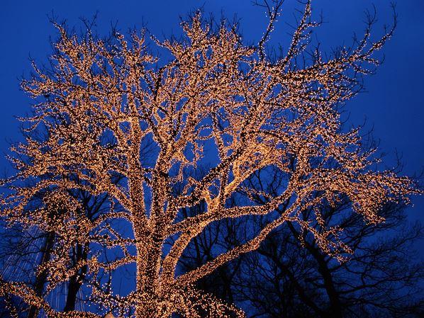Tree Lighting Experts