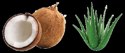 best skincare cream ingredients - coconut oil and aloe