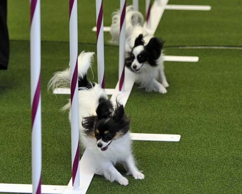 Insurance for Dog Trials and Dog Test
