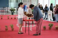 Lollipop Poplicious Castellum Mare Cavalier King Charles Spaniel Champion Portugal