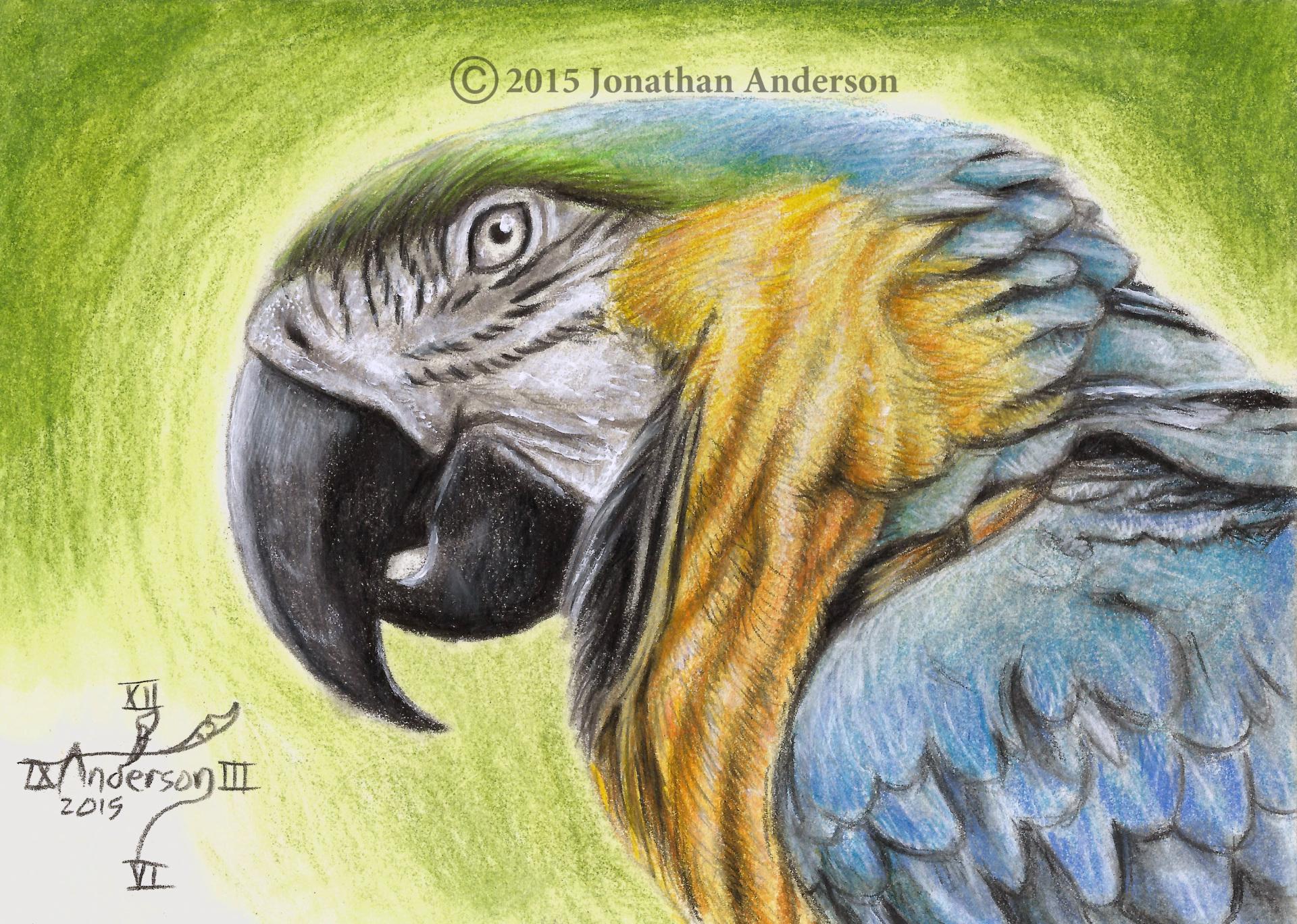 Parrot close up