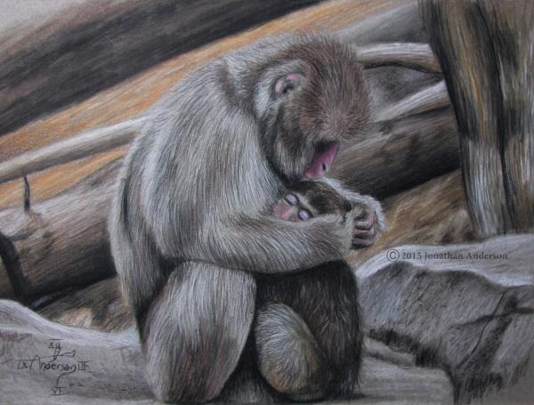 Monkey scene