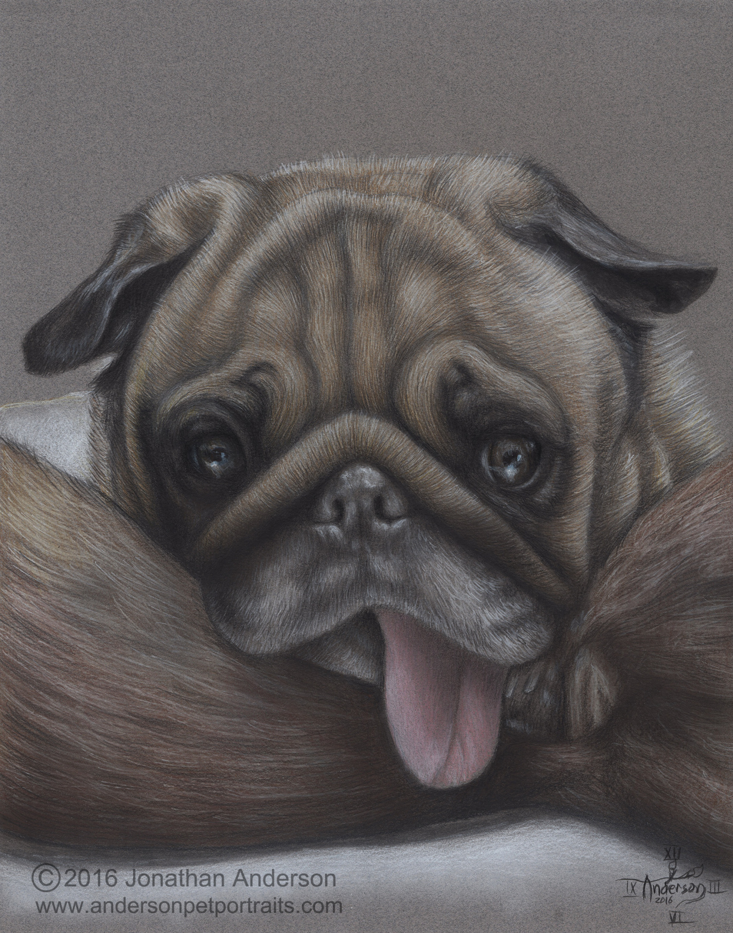Pug close up