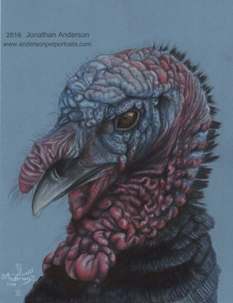 Turkey close up