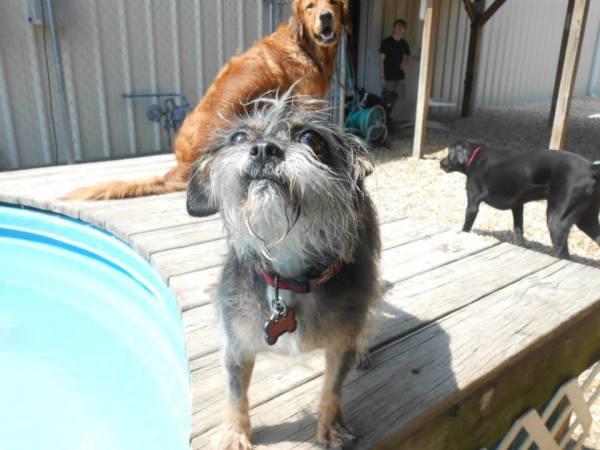 dog day care pelham al