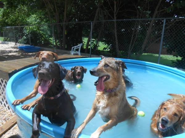 dog day care pelham al