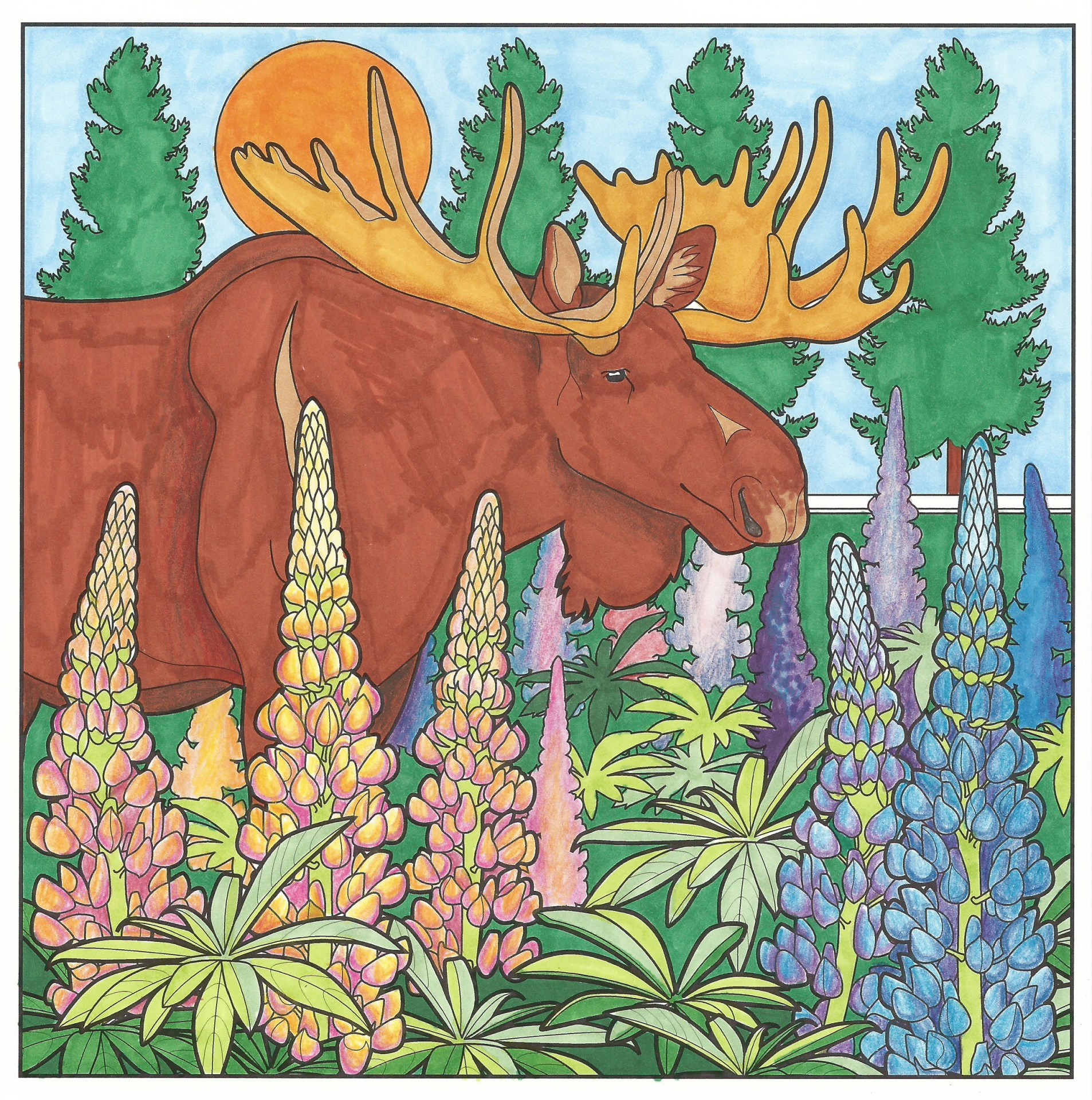Moose in the Lupins