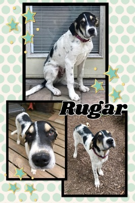 Rugar