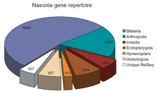 Nasonia1