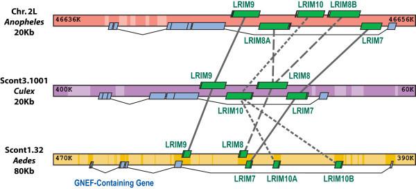 LRIMs2