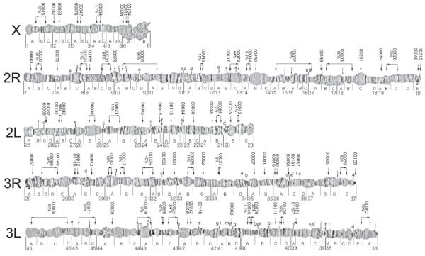 stephensi1