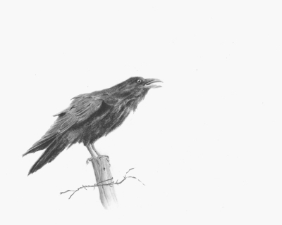 "Nevermore""  graphite"