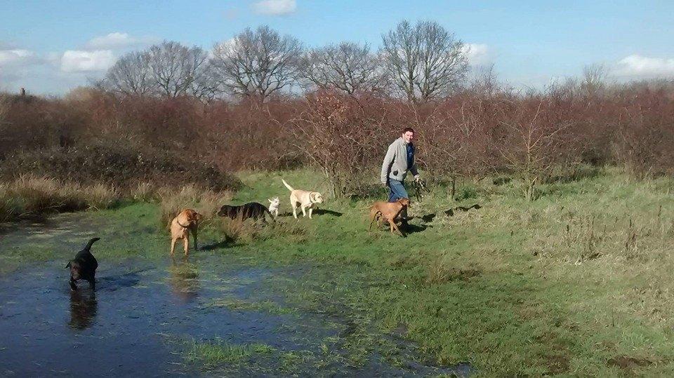 DogRunners dog walking at Belhus Woods