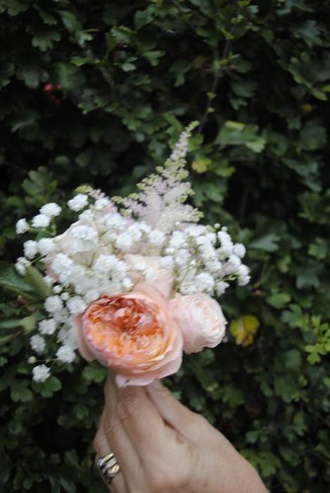 Buttonhole of fresh golden vuvuzela rose gyp and astilbe
