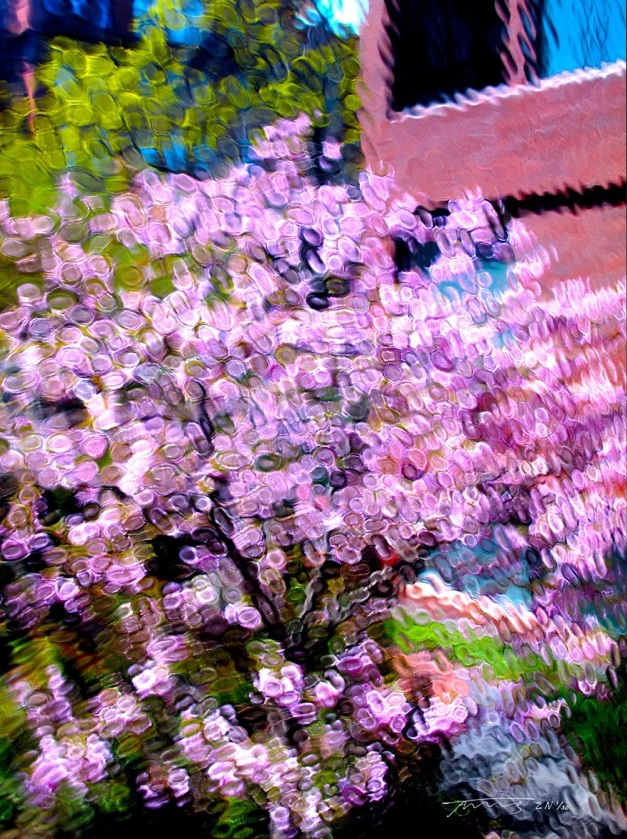 "Cherry in Blossom, 24"" x 32"" (other sizes on request), 650 editions"