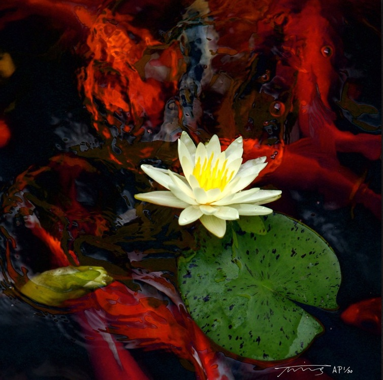 "Water Lily, 24"" x 24""; 30"" x 30""; 35"" x 35"" (other sizes on request), 950 editions"