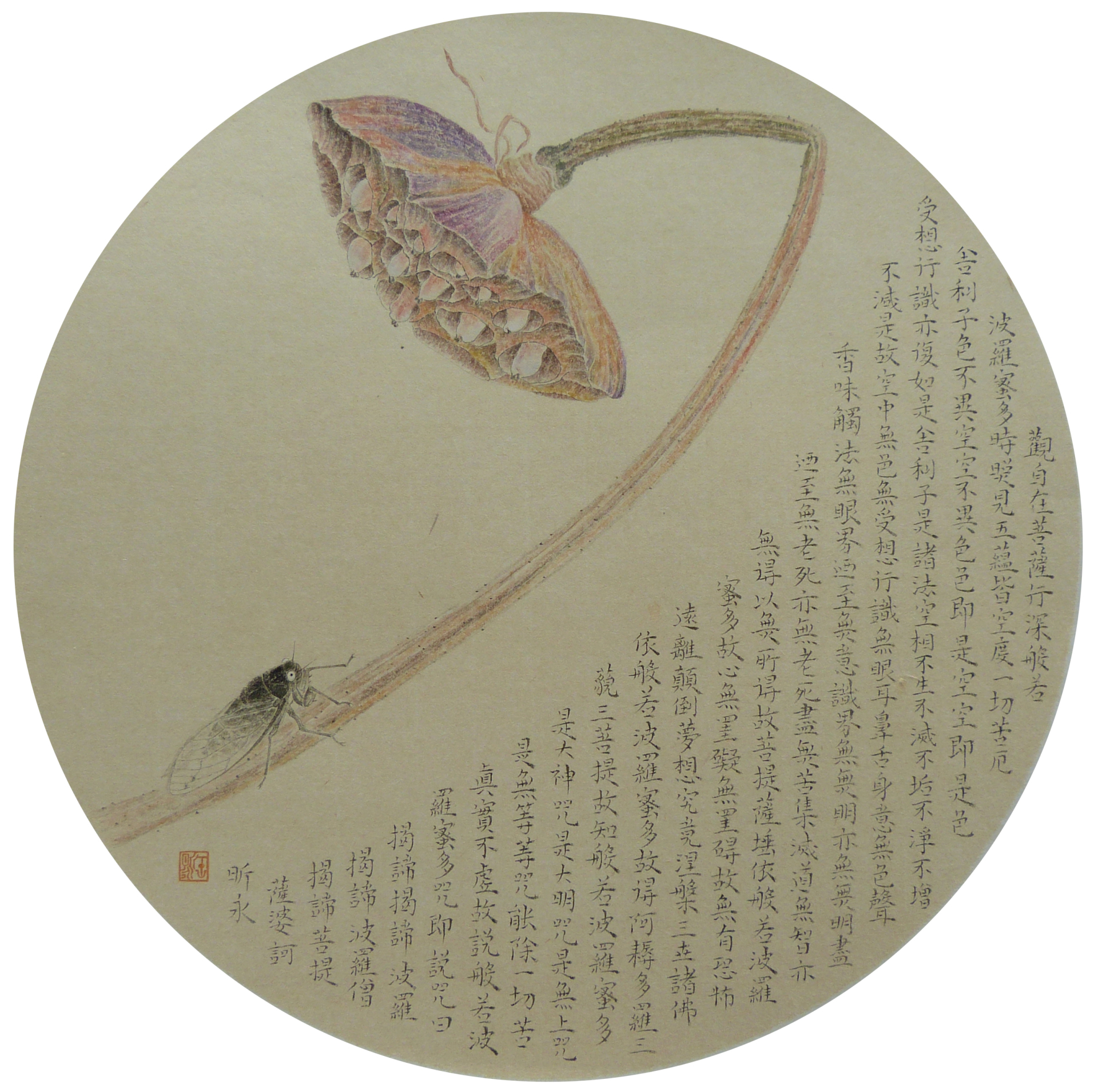 Dried lotus seedpod-1 - 35*35cm