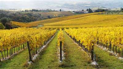The Color of Fall in the Vineyards