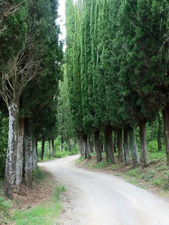 A CLASSIC CYPRESS TREE-LINED ENTRY