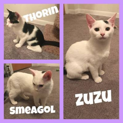 Thorin, Smeagol and Zuzu