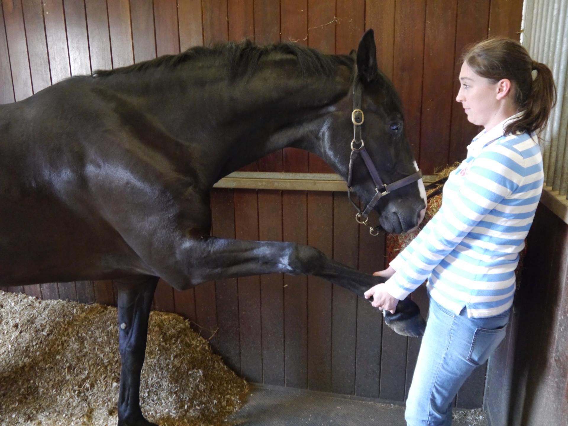horse shoulder stretch
