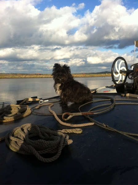 Ellie the barge dog watching the world go by.