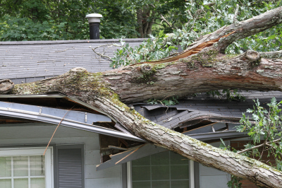 DENVER WIND STORM! What You Need To Know...
