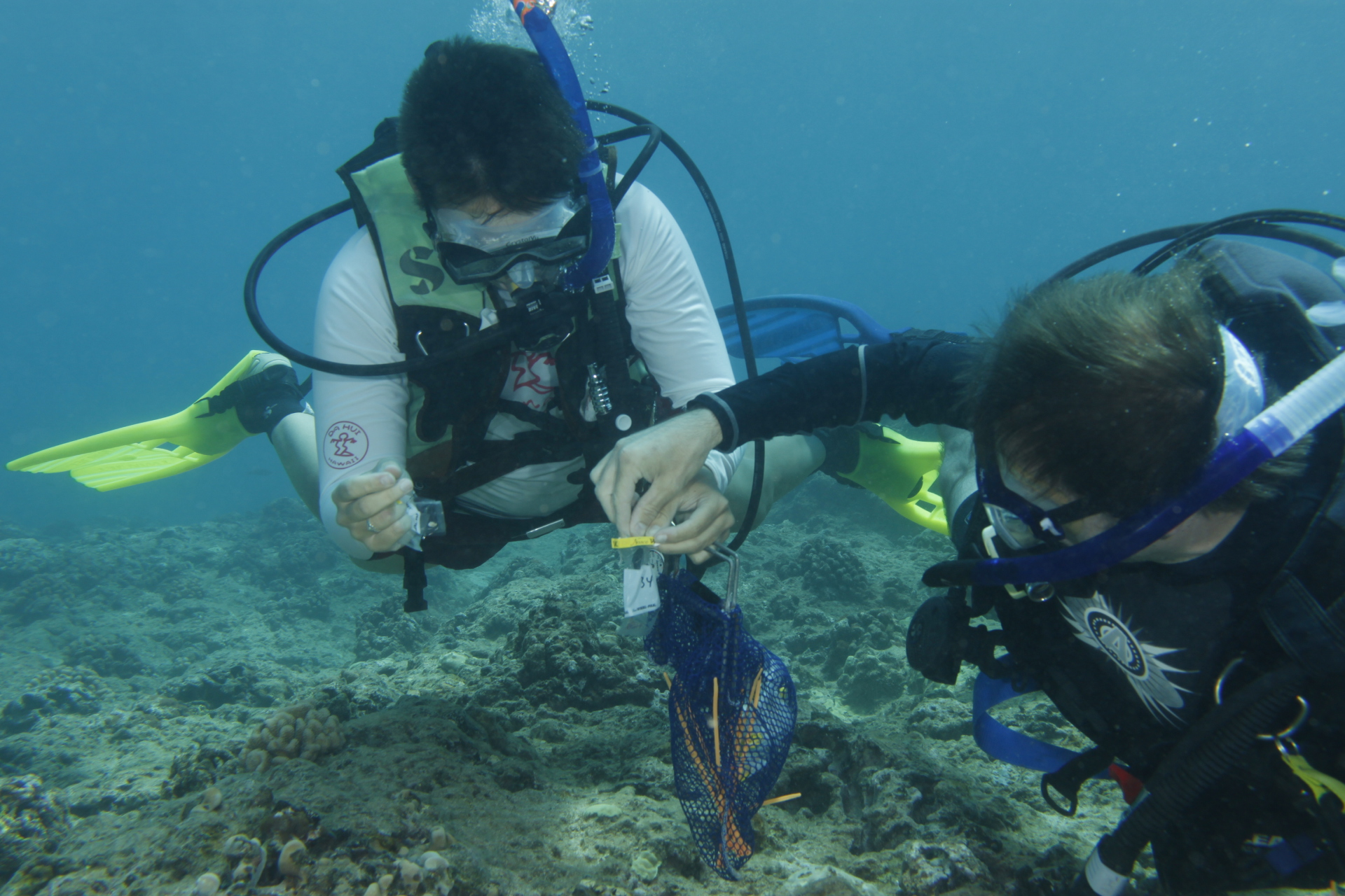 Sampling coral communities in Kaneohe Bay