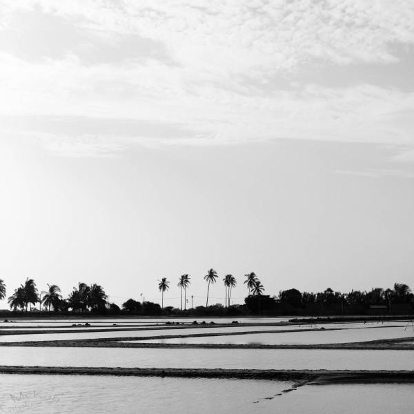 overlooking the lagoon