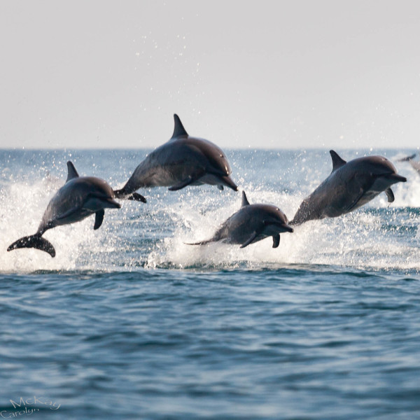 enjoy a dolphin watching trip