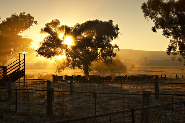 New immediate deduction for primary producers