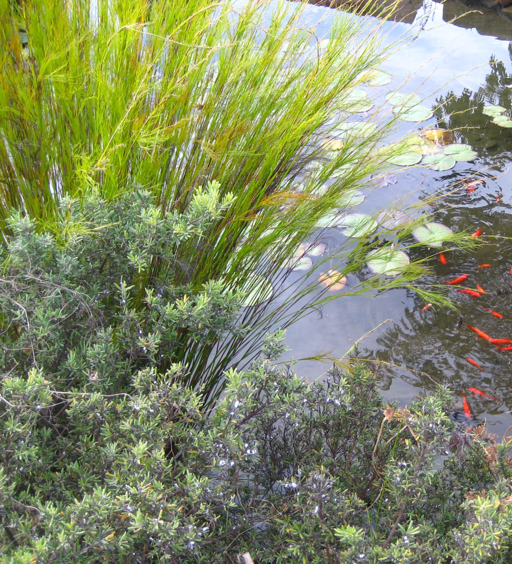 Pond plantings
