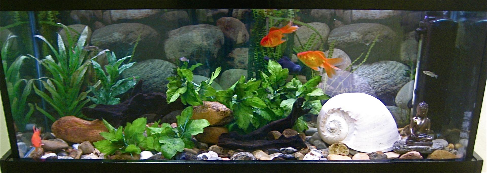 Goldfish river