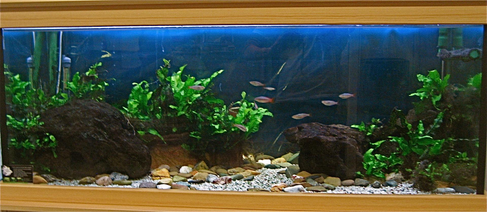 Rainbowfish rockery