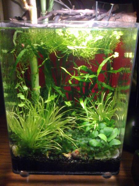 Zen snail riparium (underwater view)