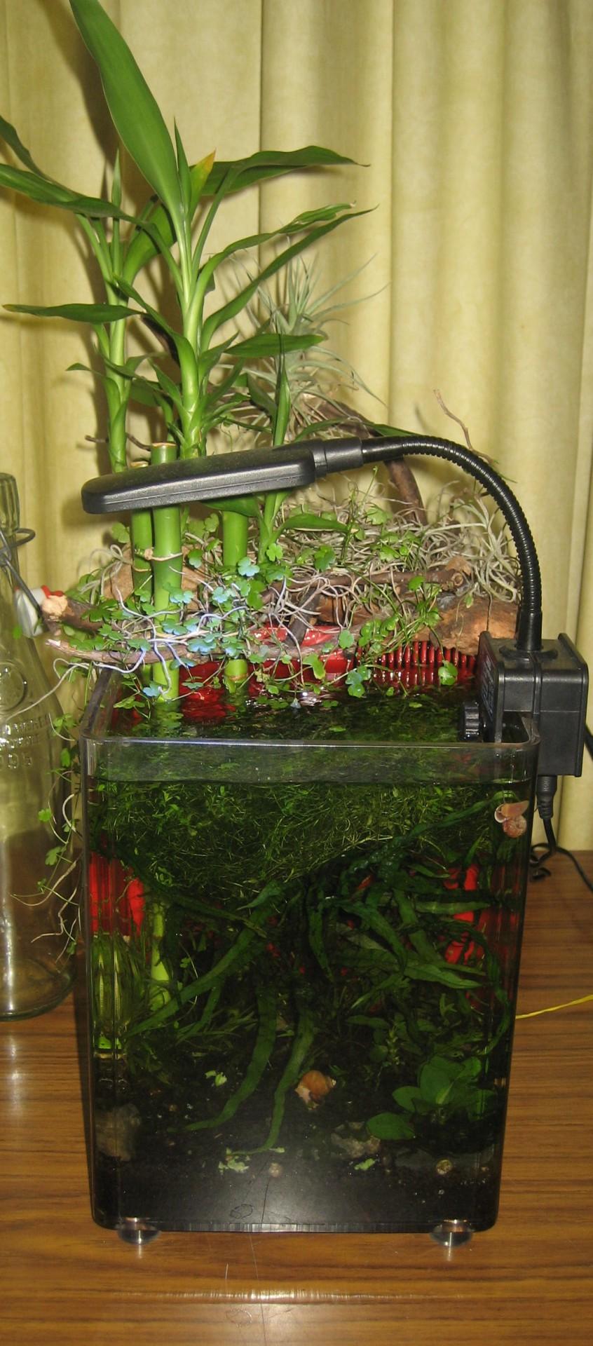 Zen snail riparium (full view)